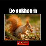3416 de eekhoorn(h) copy