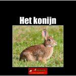 3438het_konijn(h) copy