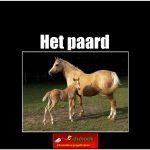 3476het_paard copy