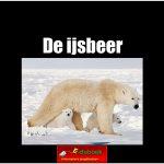 3486de_ijsbeer copy
