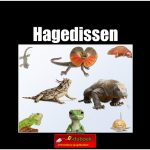 56101hagedissen copy