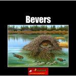 5626 bevers (h) copy