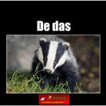 5697de_das copy