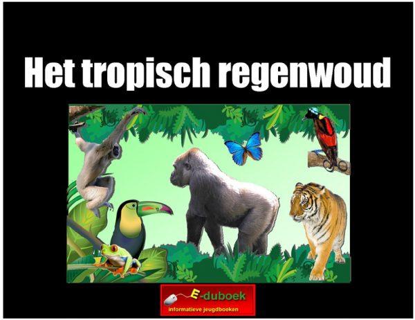 7811 het tropisch regenwoud(h) copy