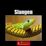 7814 slangen(h) copy