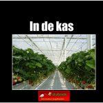 7862in_de_kas