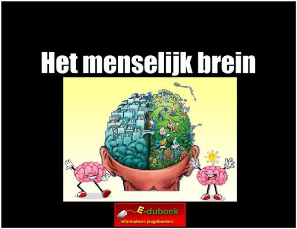7869Het_menselijk_brein (h) copy