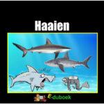 5647 haaien voorkant